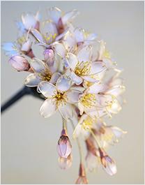 花液金属是铁和电镀合